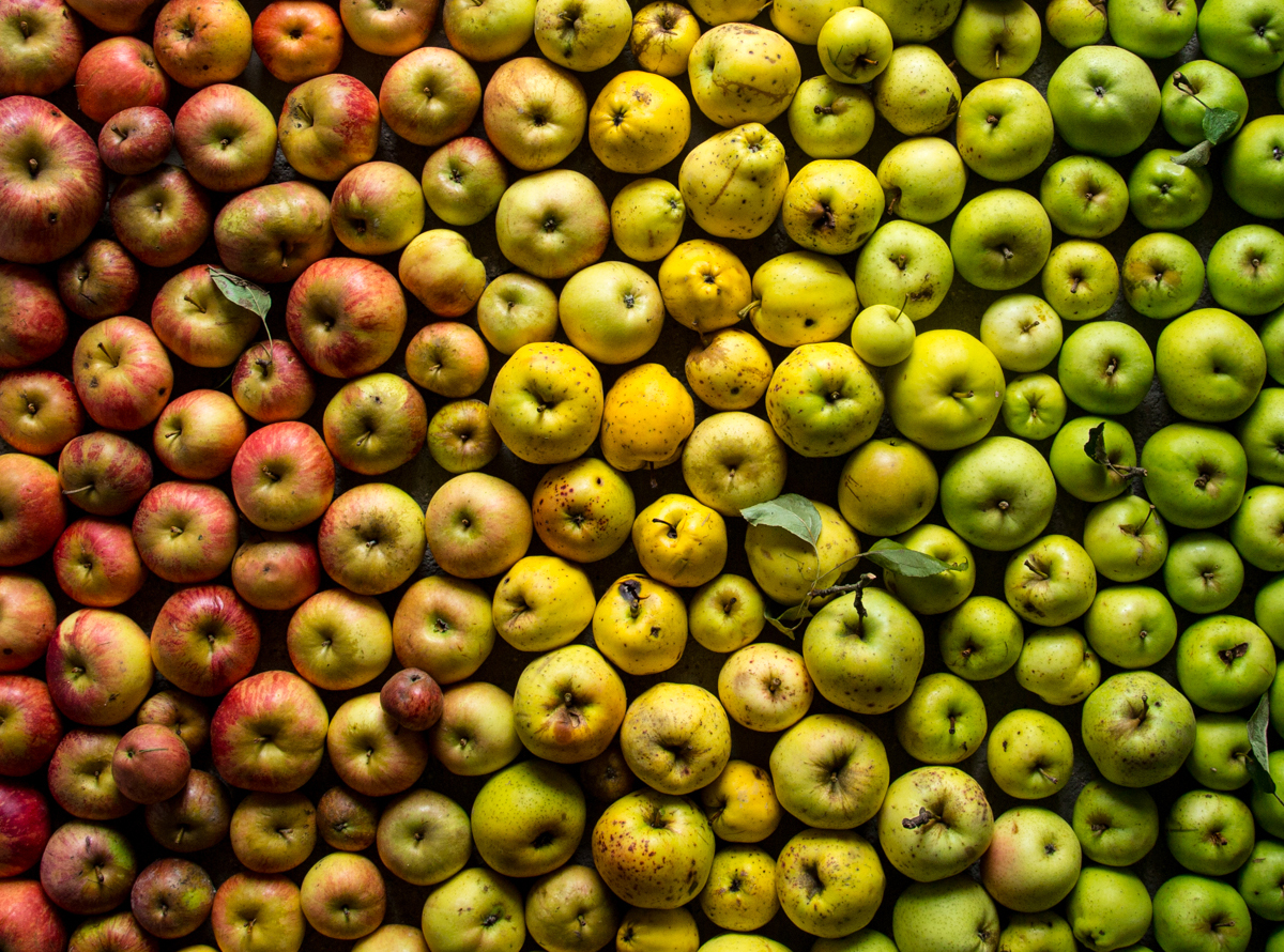 pommes jveb